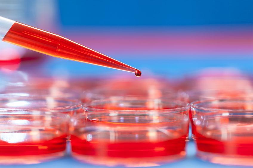 La nuova frontiera della medicina rigenerativa